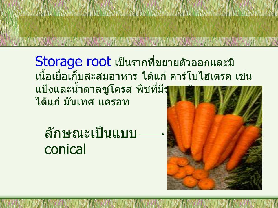 Storage root เป็นรากที่ขยายตัวออกและมีเนื้อเยื่อเก็บสะสมอาหาร ได้แก่ คาร์โบไฮเดรต เช่น แป้งและน้ำตาลซูโครส พืชที่มีรากแก้วสะสมอาหาร ได้แก่ มันเทศ แครอท