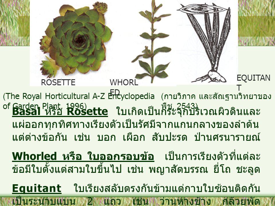 EQUITANT ROSETTE. WHORLED. (The Royal Horticultural A-Z Encyclopedia of Garden Plant, 1996) (กายวิภาค และสัณฐานวิทยาของพืช, 2543)