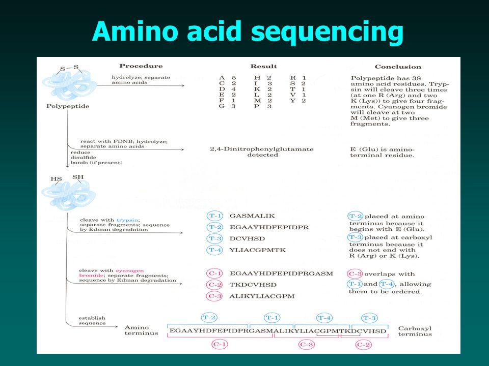 Amino acid sequencing