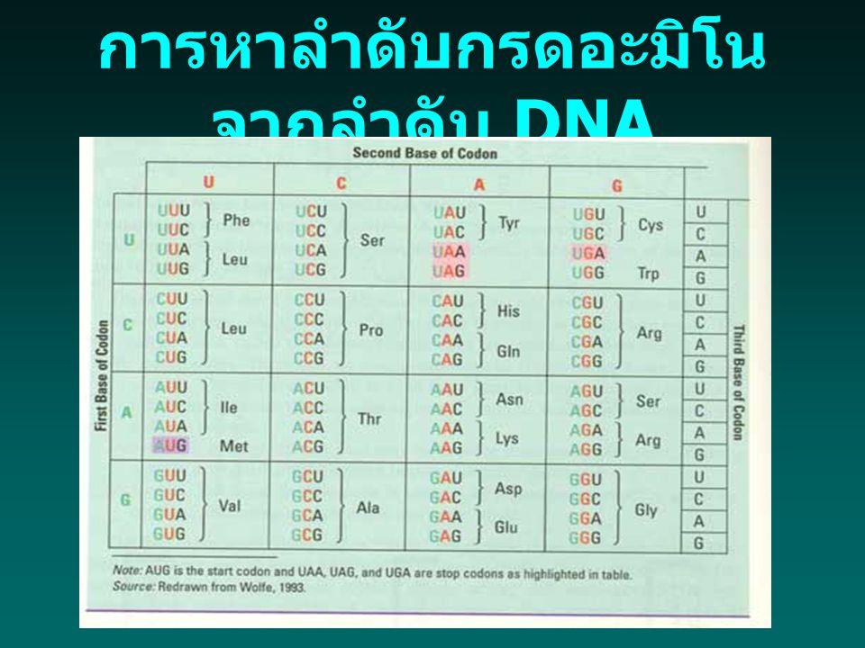 การหาลำดับกรดอะมิโนจากลำดับ DNA