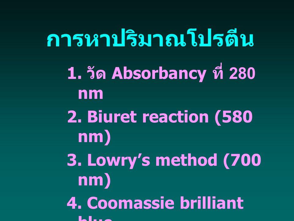 การหาปริมาณโปรตีน 1. วัด Absorbancy ที่ 280 nm