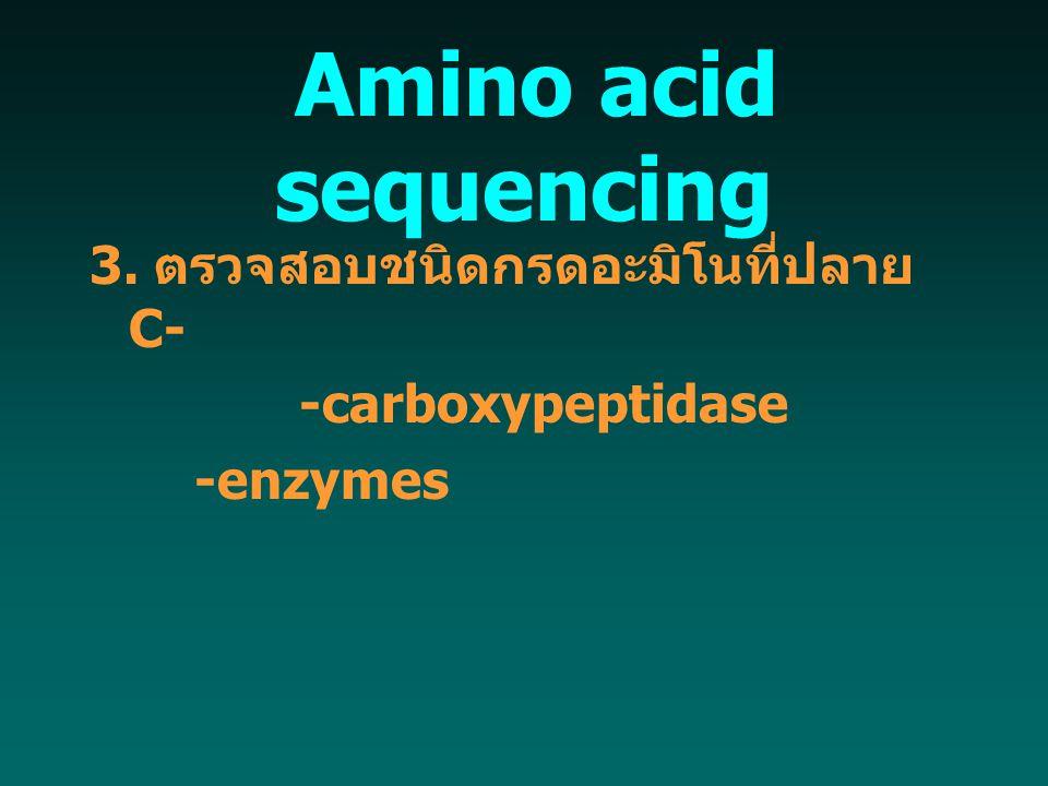 Amino acid sequencing 3. ตรวจสอบชนิดกรดอะมิโนที่ปลาย C-