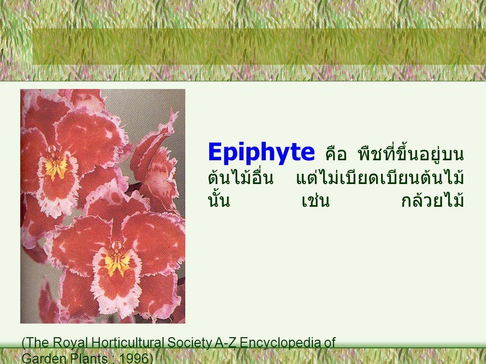 Epiphyte คือ พืชที่ขึ้นอยู่บนต้นไม้อื่น แต่ไม่เบียดเบียนต้นไม้นั้น เช่น กล้วยไม้