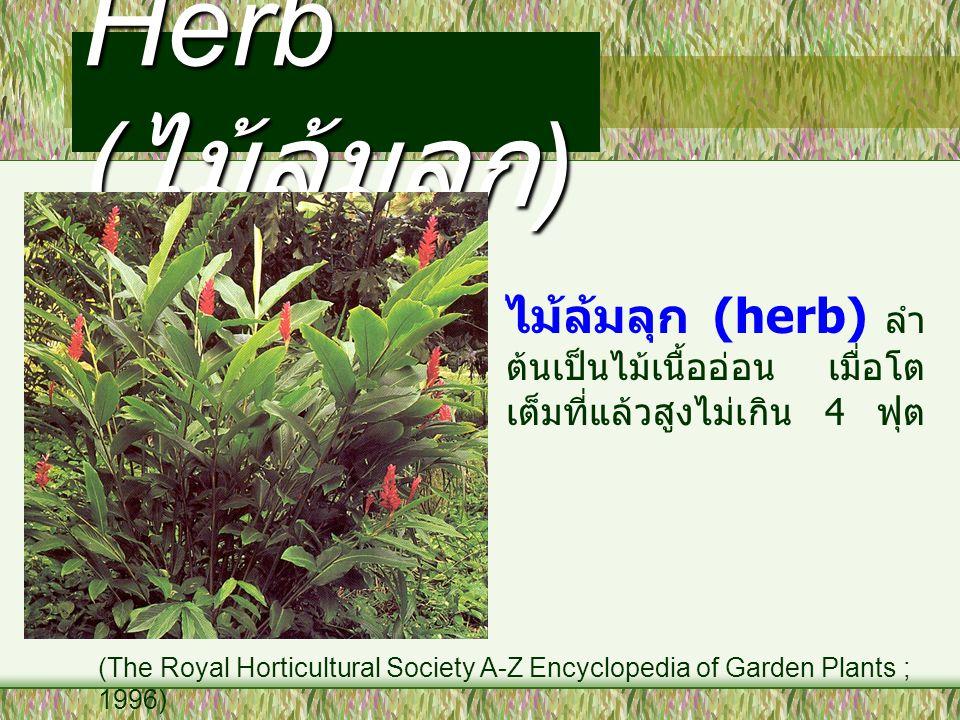 Herb (ไม้ล้มลุก) ไม้ล้มลุก (herb) ลำต้นเป็นไม้เนื้ออ่อน เมื่อโตเต็มที่แล้วสูงไม่เกิน 4 ฟุต.