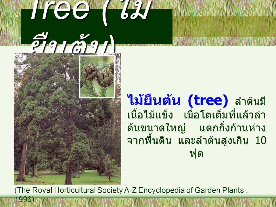 Tree (ไม้ยืนต้น) ไม้ยืนต้น (tree) ลำต้นมีเนื้อไม้แข็ง เมื่อโตเต็มที่แล้วลำต้นขนาดใหญ่ แตกกิ่งก้านห่างจากพื้นดิน และลำต้นสูงเกิน 10 ฟุต.