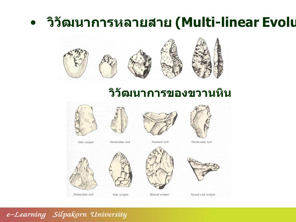 วิวัฒนาการหลายสาย (Multi-linear Evolution)