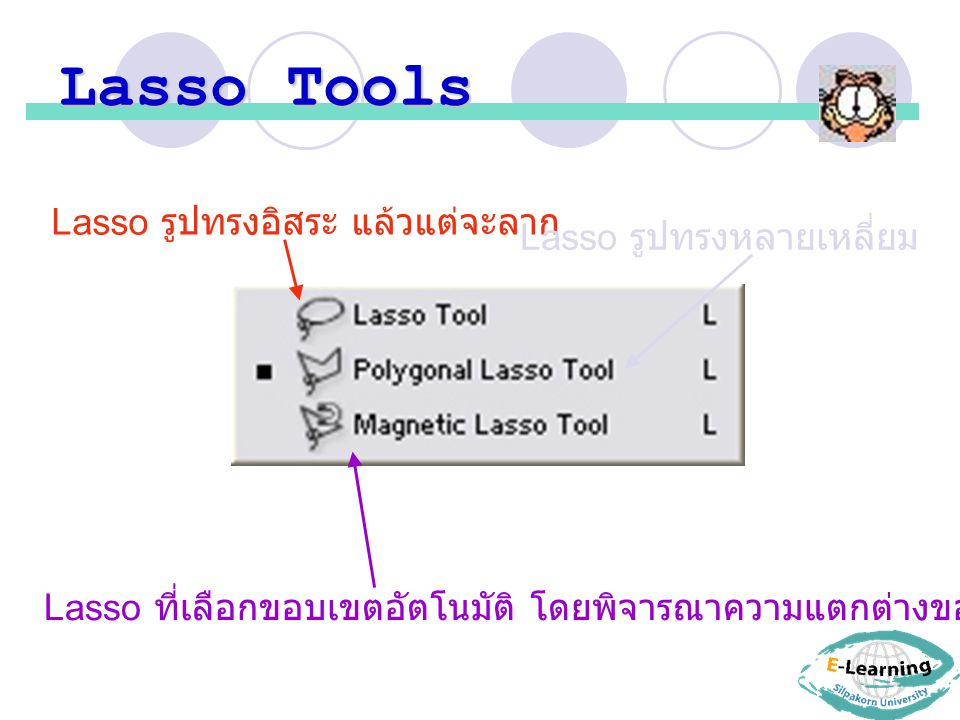 Lasso Tools Lasso รูปทรงอิสระ แล้วแต่จะลาก Lasso รูปทรงหลายเหลี่ยม
