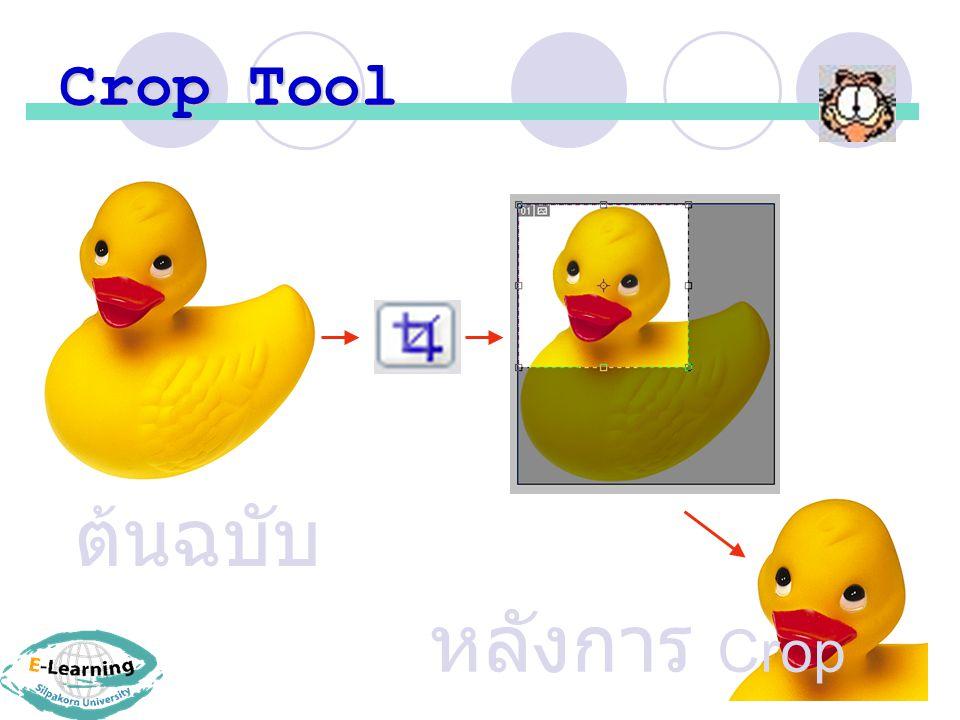 Crop Tool ต้นฉบับ หลังการ Crop