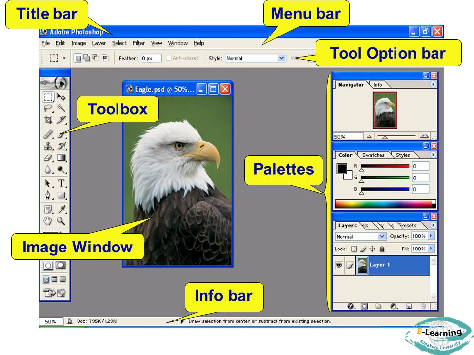 Title bar Menu bar Tool Option bar Toolbox Palettes Image Window Info bar