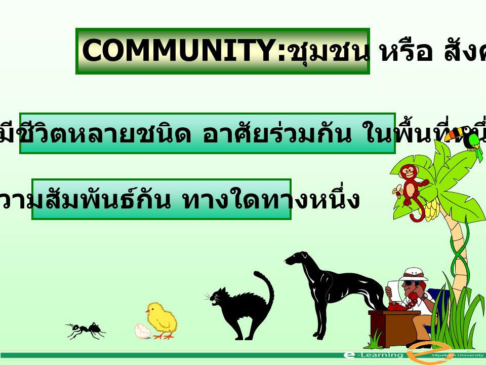 COMMUNITY:ชุมชน หรือ สังคม