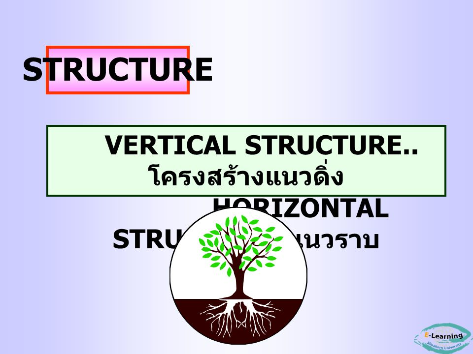 VERTICAL STRUCTURE..โครงสร้างแนวดิ่ง HORIZONTAL STRUCTURE..แนวราบ
