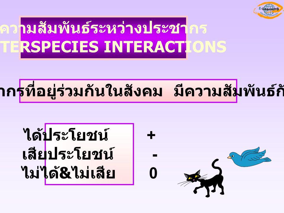 ความสัมพันธ์ระหว่างประชากร INTERSPECIES INTERACTIONS