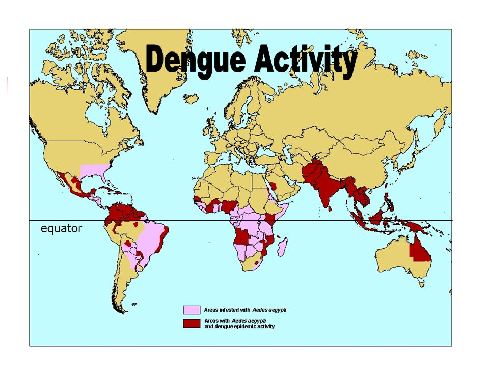 Dengue Activity equator