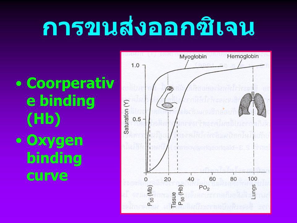 การขนส่งออกซิเจน Coorperative binding (Hb) Oxygen binding curve