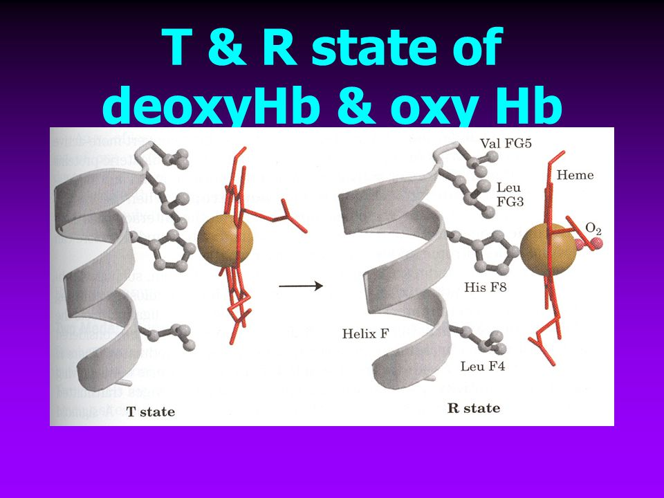 T & R state of deoxyHb & oxy Hb