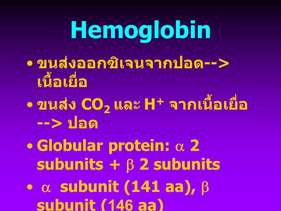 Hemoglobin ขนส่งออกซิเจนจากปอด-->เนื้อเยื่อ