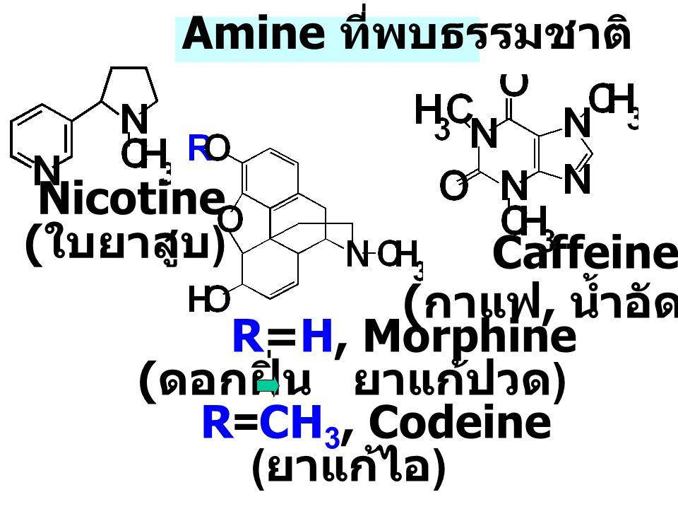 Caffeine Amine ที่พบธรรมชาติ Nicotine (ใบยาสูบ) (กาแฟ, น้ำอัดลม)