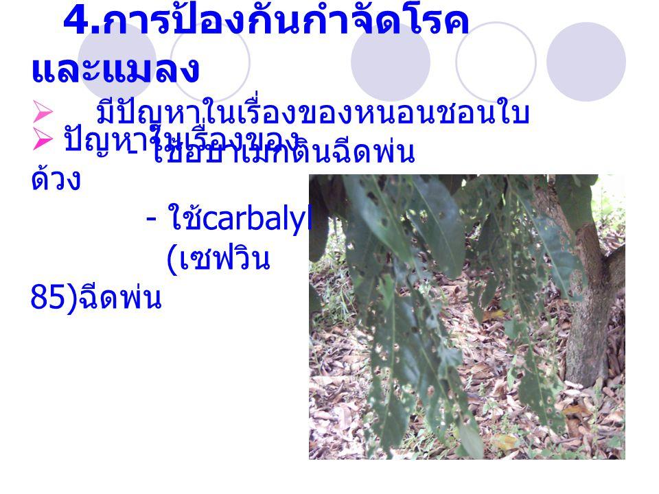 4.การป้องกันกำจัดโรคและแมลง