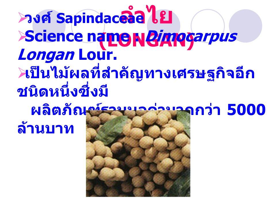 ลำไย (LONGAN) วงศ์ Sapindaceae Science name : Dimocarpus Longan Lour.