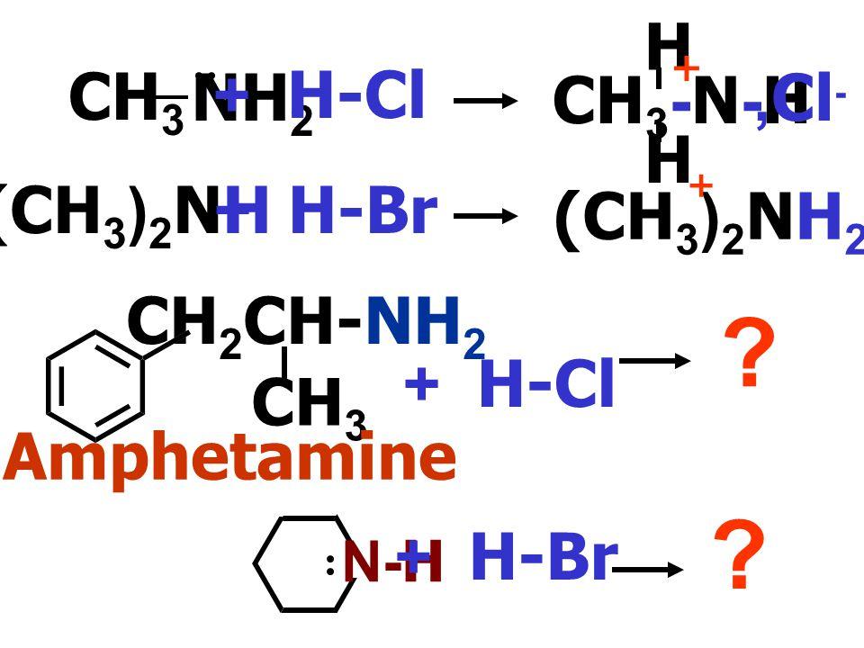 CH3-N-H H NH2 CH3 + H-Cl ,Cl- (CH3)2NH2 ,Br- (CH3)2NH + H-Br