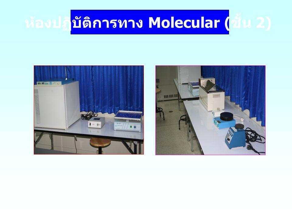 ห้องปฏิบัติการทาง Molecular (ชั้น 2)