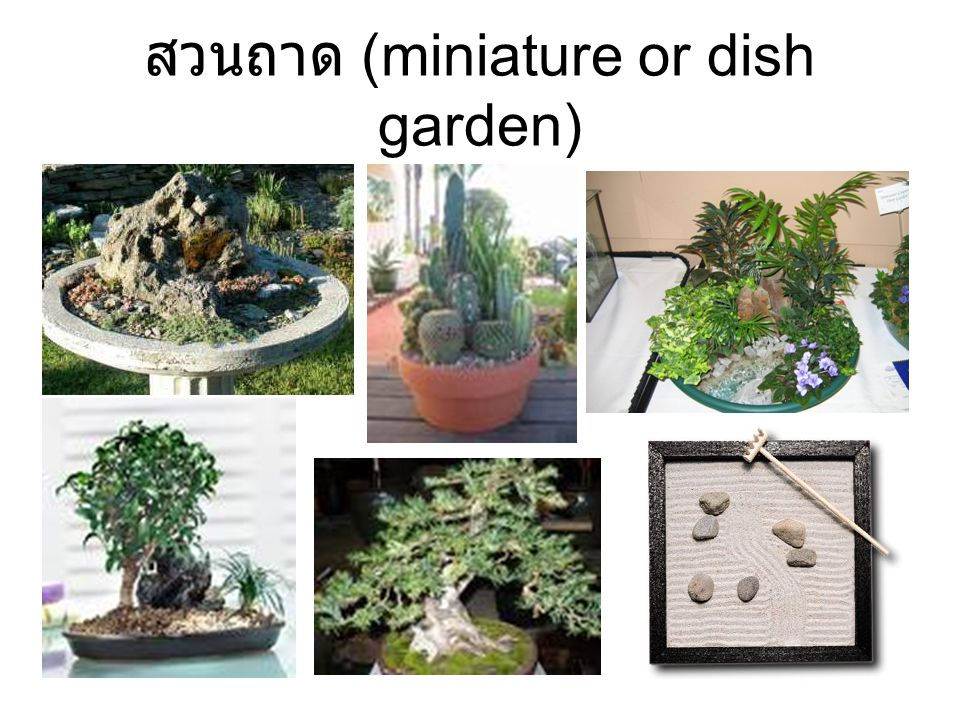 สวนถาด (miniature or dish garden)