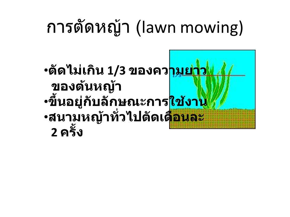 การตัดหญ้า (lawn mowing)