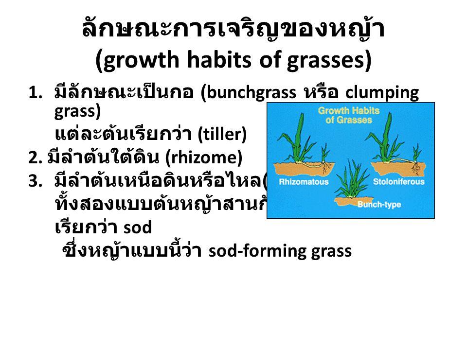 ลักษณะการเจริญของหญ้า (growth habits of grasses)