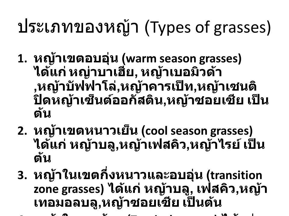 ประเภทของหญ้า (Types of grasses)