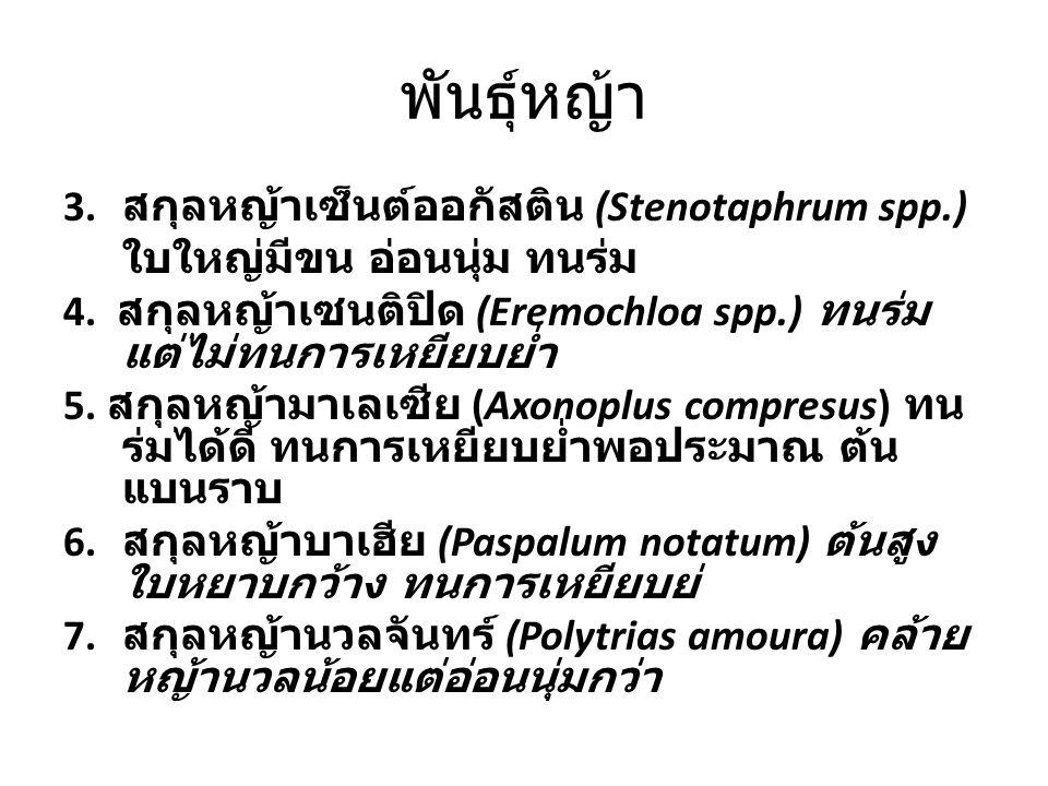 พันธุ์หญ้า สกุลหญ้าเซ็นต์ออกัสติน (Stenotaphrum spp.)