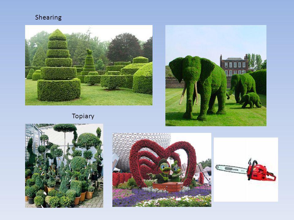 Shearing Topiary
