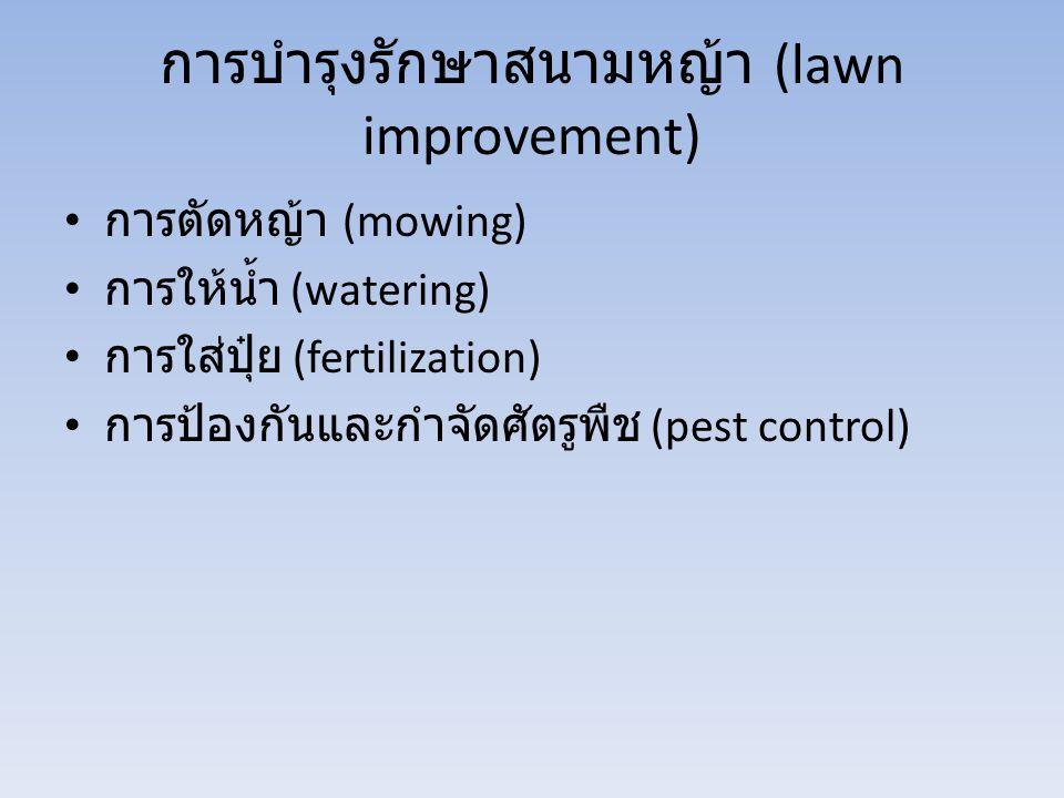 การบำรุงรักษาสนามหญ้า (lawn improvement)