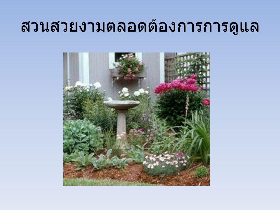 สวนสวยงามตลอดต้องการการดูแล