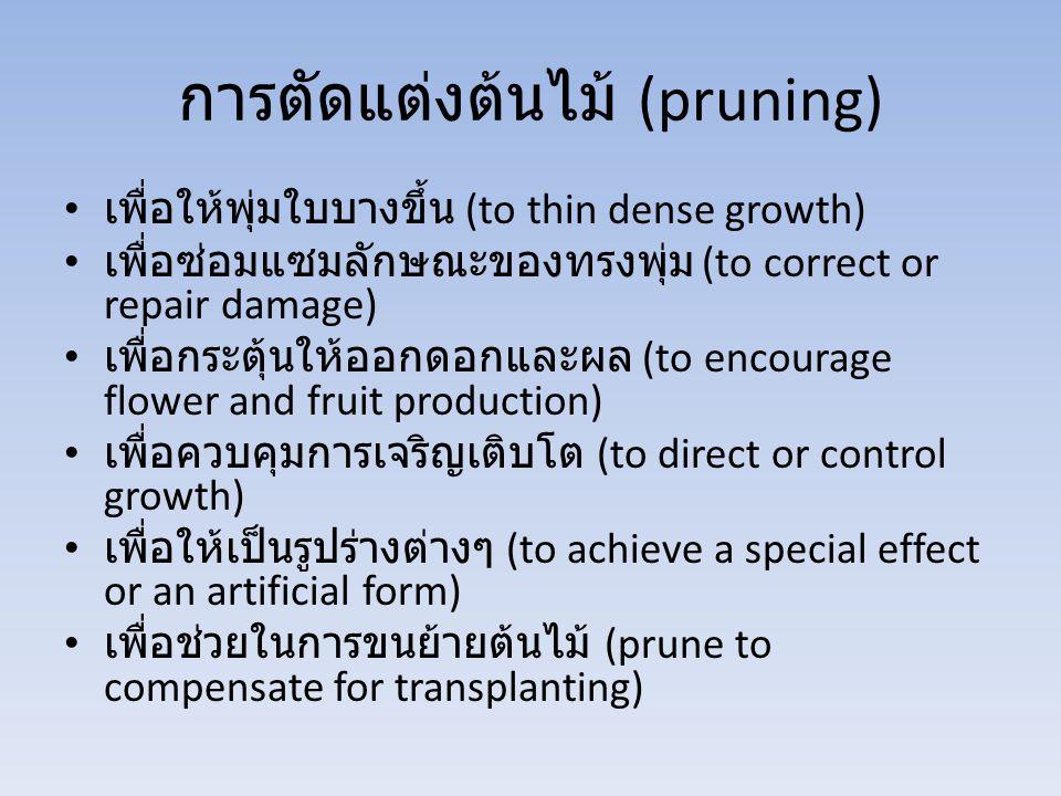 การตัดแต่งต้นไม้ (pruning)