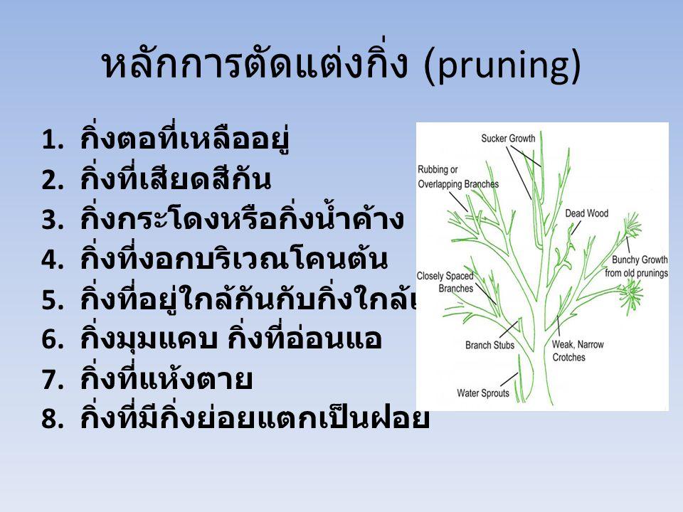 หลักการตัดแต่งกิ่ง (pruning)
