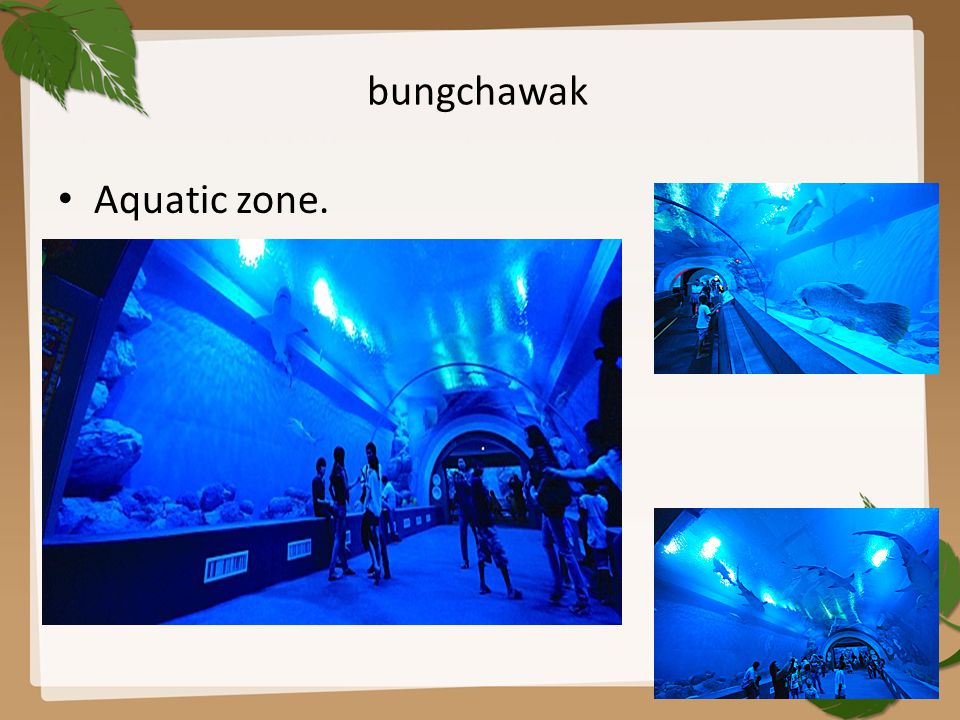 bungchawak Aquatic zone.