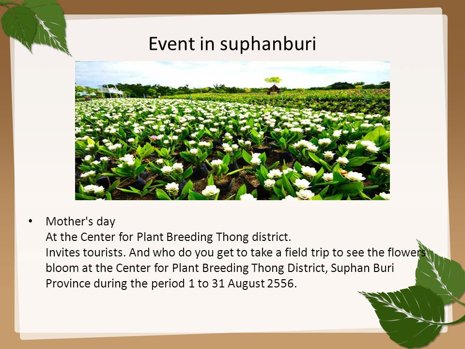 Event in suphanburi