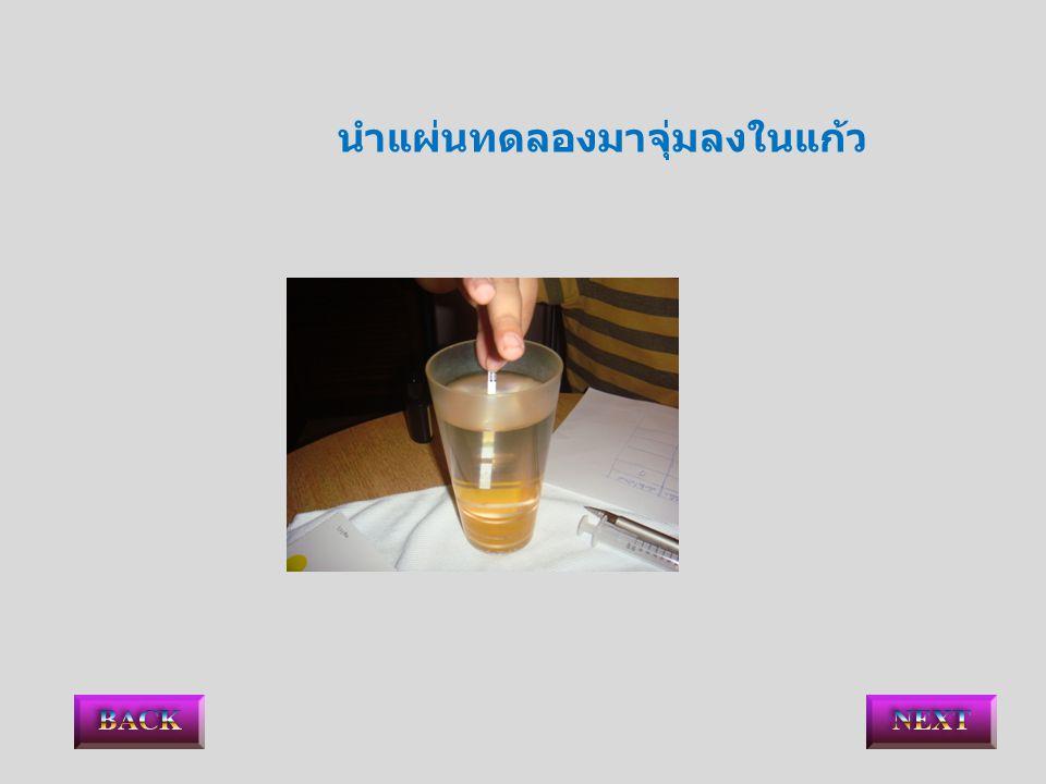 นำแผ่นทดลองมาจุ่มลงในแก้ว