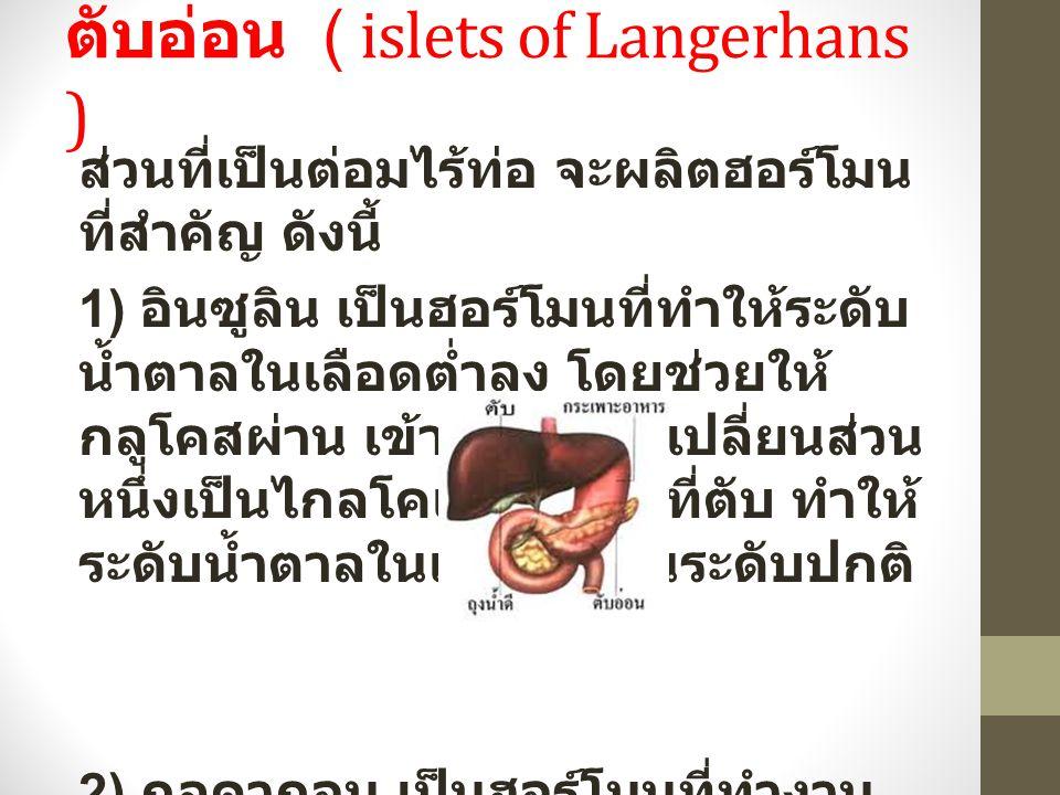 ตับอ่อน ( islets of Langerhans )