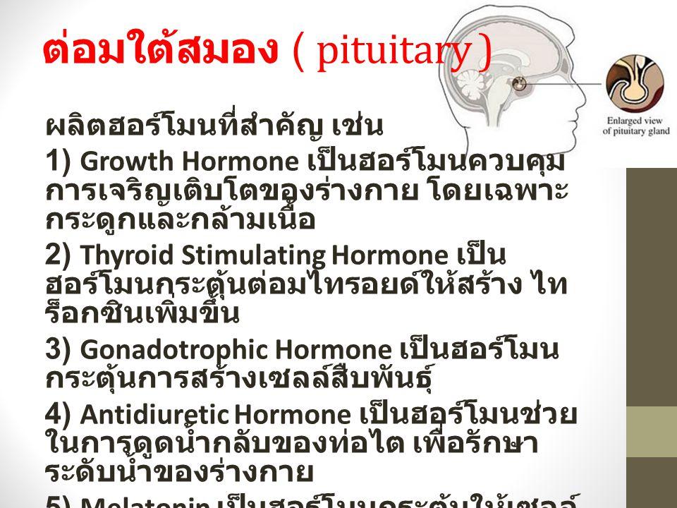 ต่อมใต้สมอง ( pituitary )