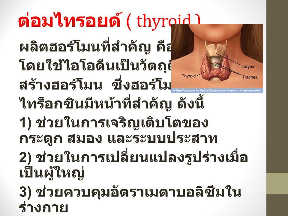 ต่อมไทรอยด์ ( thyroid )
