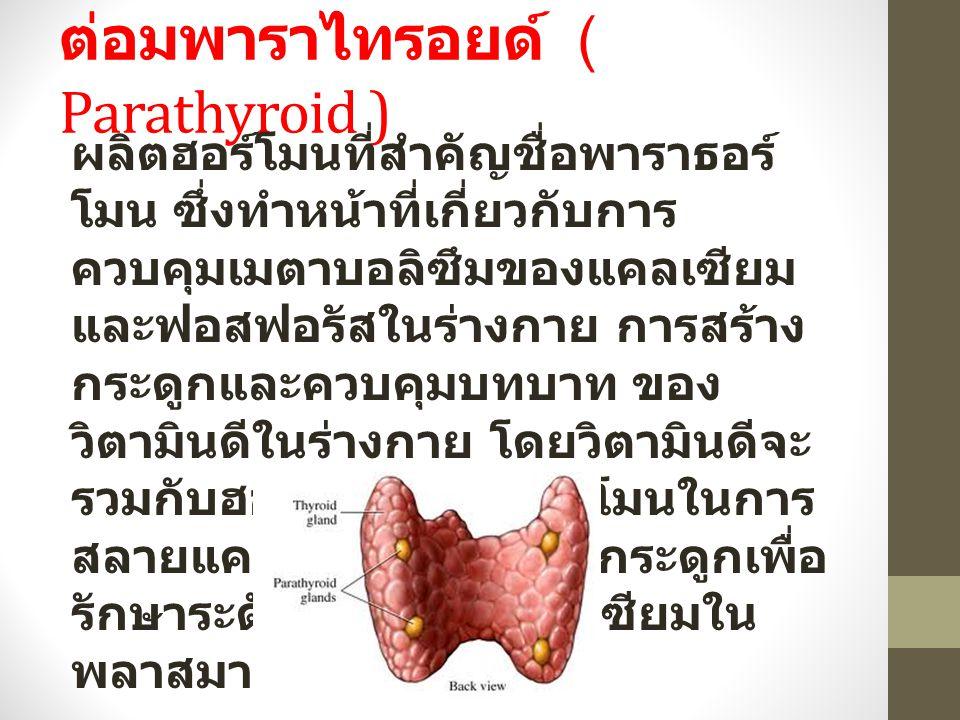 ต่อมพาราไทรอยด์ ( Parathyroid )