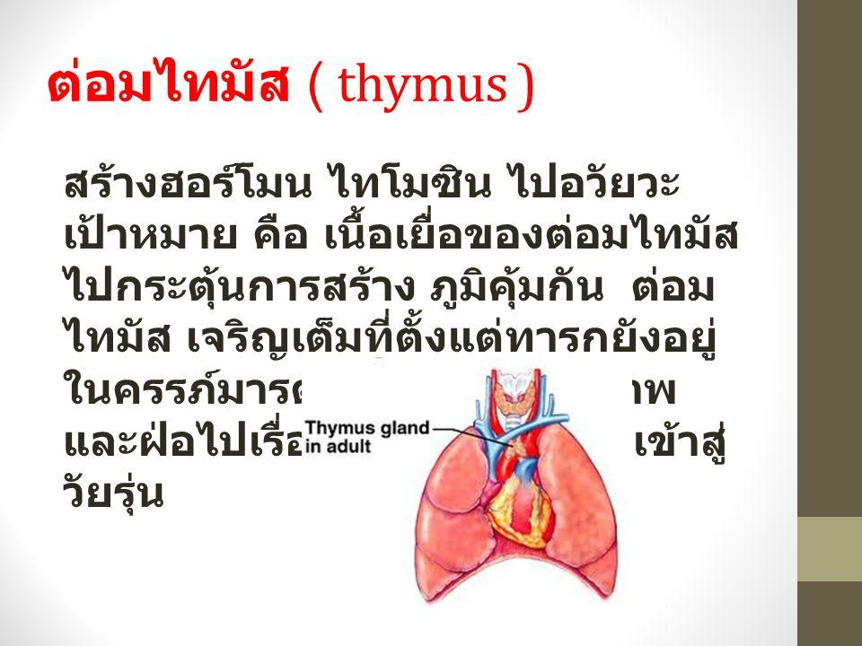 ต่อมไทมัส ( thymus )