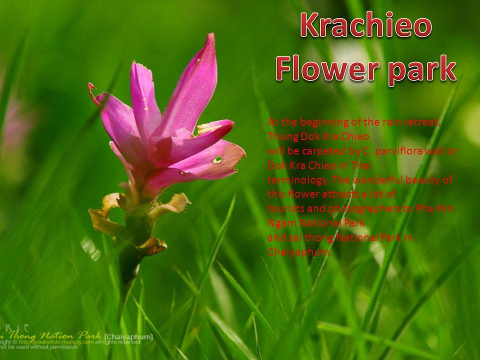 Krachieo Flower park