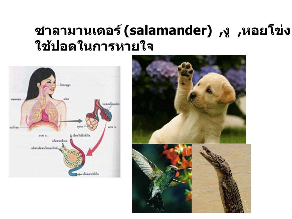 ซาลามานเดอร์ (salamander) ,งู ,หอยโข่ง , หนู ,สุนัข , นก ,คน