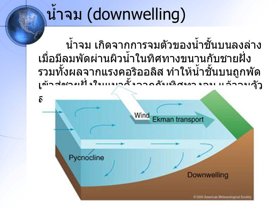 น้ำจม (downwelling)