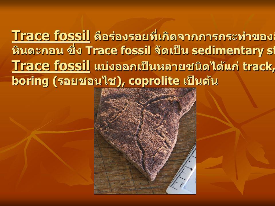 Trace fossil แบ่งออกเป็นหลายชนิดได้แก่ track, trail, burrow (รูชอนไช),