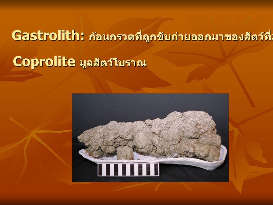 Gastrolith: ก้อนกรวดที่ถูกขับถ่ายออกมาของสัตว์ที่มีกระดูกสันหลัง