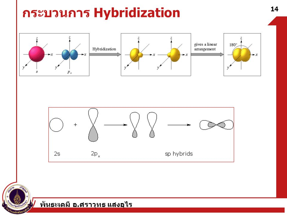 กระบวนการ Hybridization