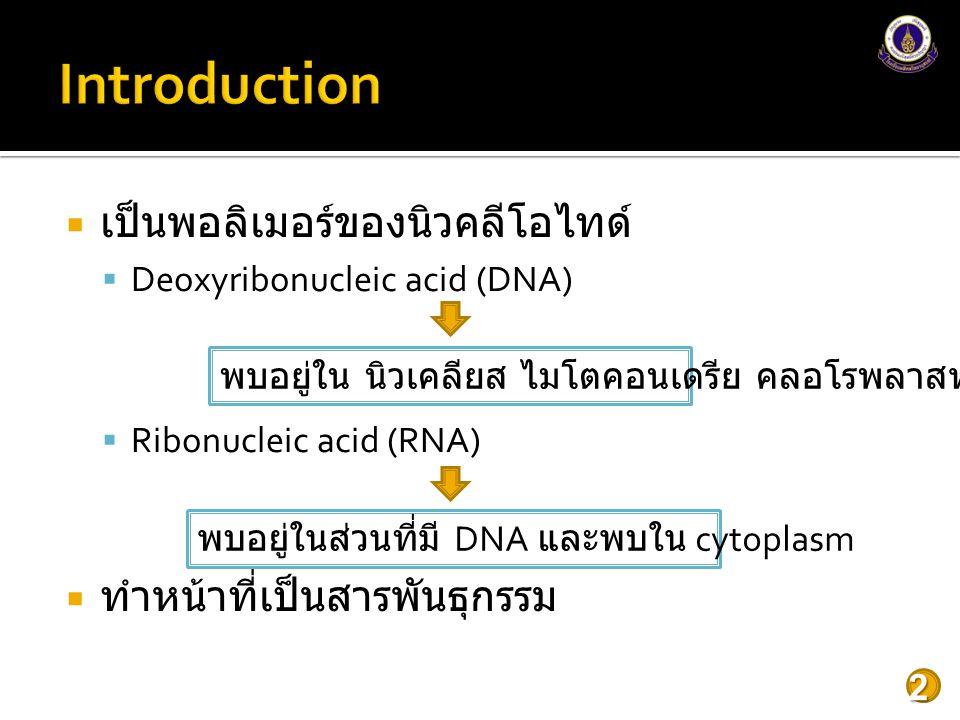 Introduction เป็นพอลิเมอร์ของนิวคลีโอไทด์ ทำหน้าที่เป็นสารพันธุกรรม